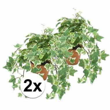2x kunstplant klimop groen/wit in terracotta pot 30 cm