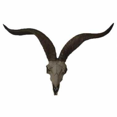 Antilope schedel met hoorns 65 cm