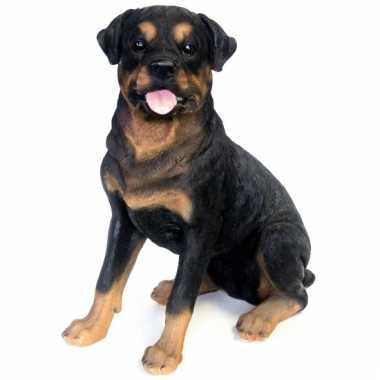 Beeld rottweiler hond 53 cm