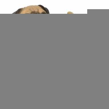 Beeldje mopshond beige 13 cm