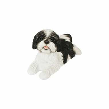 Beeldje zwart shih tzu hondje 19 cm