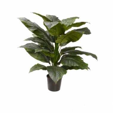 Binnen kamerplant spathiphyllum 90 cm