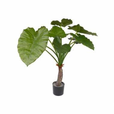 Binnen plant alocasia 80 cm