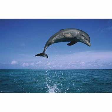 Decoratie poster dolfijn koraalrif