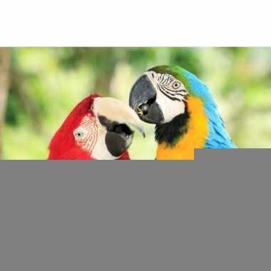 Dieren magneet 3d papegaaien