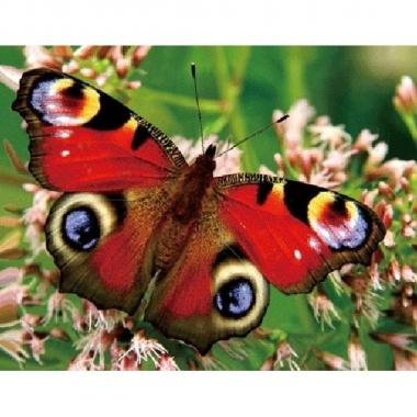 Dieren magneet 3d pauwoog vlinder