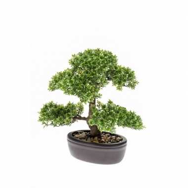 Ficus mini bonsai nepplant 32 cm