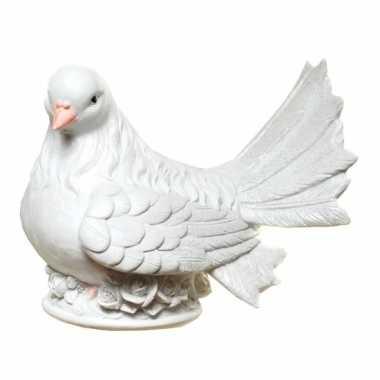 Geld spaarpot witte duif