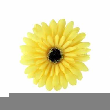 Haarbloem gerbera geel