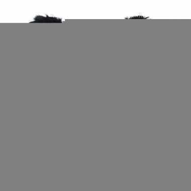 Halloween - zwarte vleugels met veren 65 x 60 cm groot