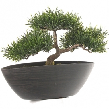 Japanse den nepplant 26 cm