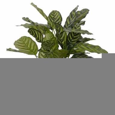 Kantoor kunstplant calathea 67 cm