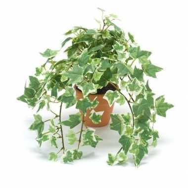 Kantoor kunstplant klimop groen/wit in terracotta pot 30 cm