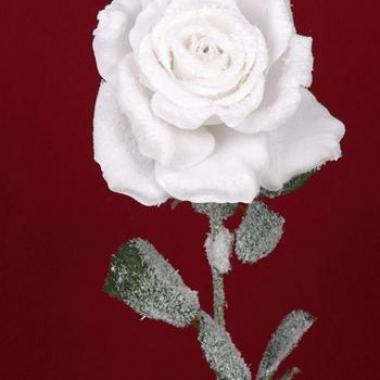 Kerst roos met sneeuw 66 cm