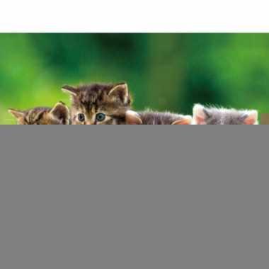 Kitten placemat 40 cm
