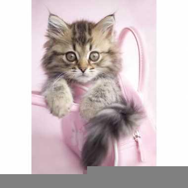 Maine coon katten poster