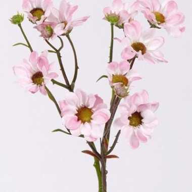 Margriet licht roze bloemen