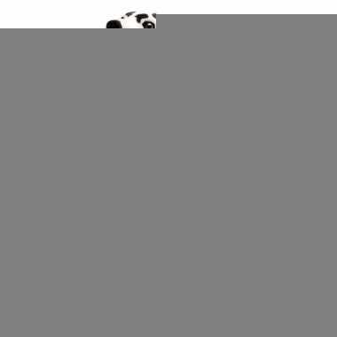 Mega dalmatier knuffeldier 81 cm