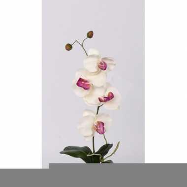 Orchidee tak wit met roze bloemen
