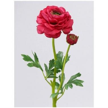 Ranonkel rood/roze 8 cm diameter