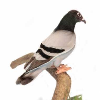 Realistische pluche duif 29 cm