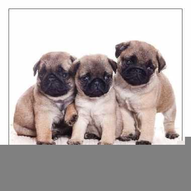 Servetten dieren thema hond 3-laags 20 stuks