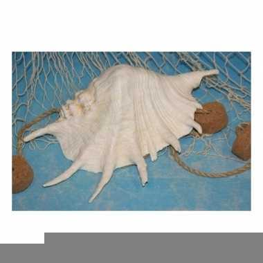 Witte decoratie schelp 22 cm