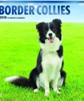 2018 kalender met border collies trend