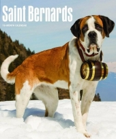 2018 kalender met sint bernard honden trend