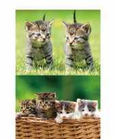 2x dieren magneten 3d kittens trend