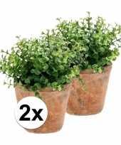 2x kunstplant eucalyptus groen in oude terracotta pot 20 cm trend