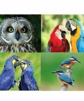 4x dieren magneten vogels trend