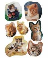 63x katten poezen dieren stickers trend