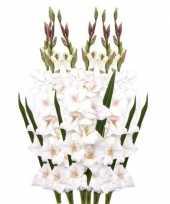 6x gladiool bloem 102 cm wit trend