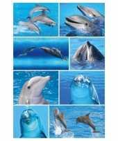 72x dolfijnen dieren stickers trend