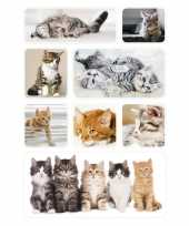 72x poezen katten kittens dieren stickers trend