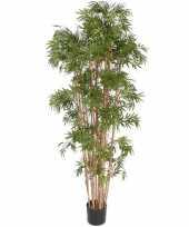 Bamboe plant 150 cm trend