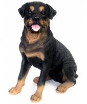 Beeld rottweiler hond 53 cm trend