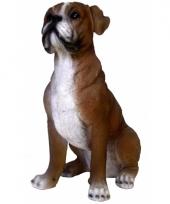 Beeldje boxer hond 25 cm trend
