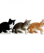 Beeldje spelende zwarte kat 35 cm trend