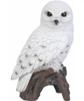 Beeldjes sneeuwuil vogeltjes 27 cm trend
