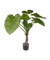 Binnen plant alocasia 80 cm trend
