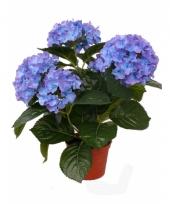 Blauwe hortensia kunstplant 36 cm trend