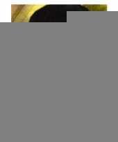 Carnaval oogmasker in de kleur goud trend