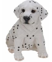 Dalmatier puppy zittend van polystone 23 cm trend