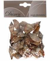 Decoratie schelpen zeeslak strombus urseum 3 cm trend