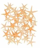 Decoratie zeesterren 50 stuks trend