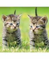 Dieren magneet 3d 2 kittens trend