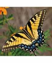 Dieren magneet 3d gele vlinder trend