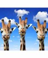 Dieren magneet 3d giraffes trend